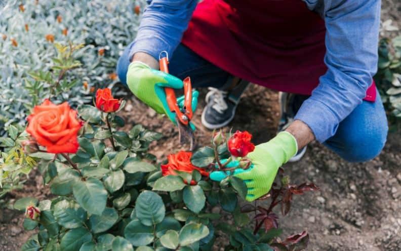 useful-gardening-tips-6-pruning-shrubs