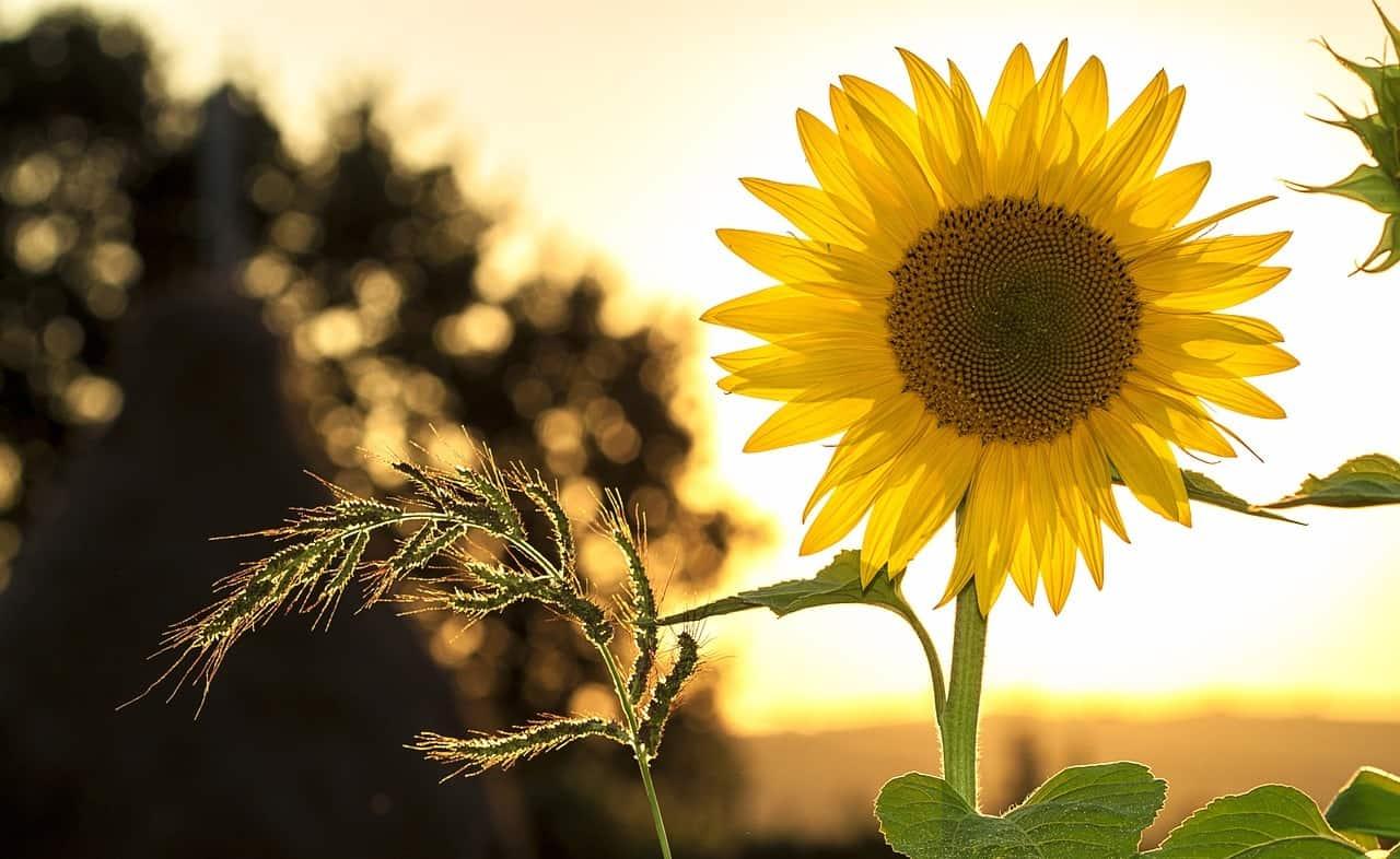 useful-gardening-tips-7-amount-of-light-plants-need