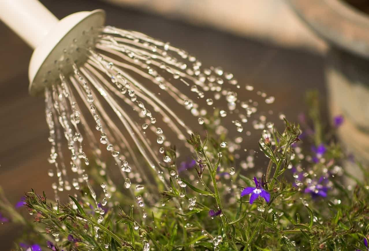 useful-gardening-tips-9-water-care-for-your-plants