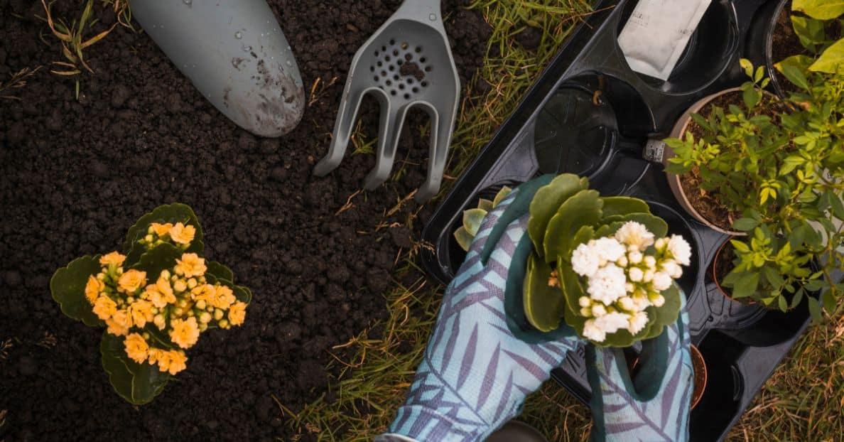 useful-gardening-tips