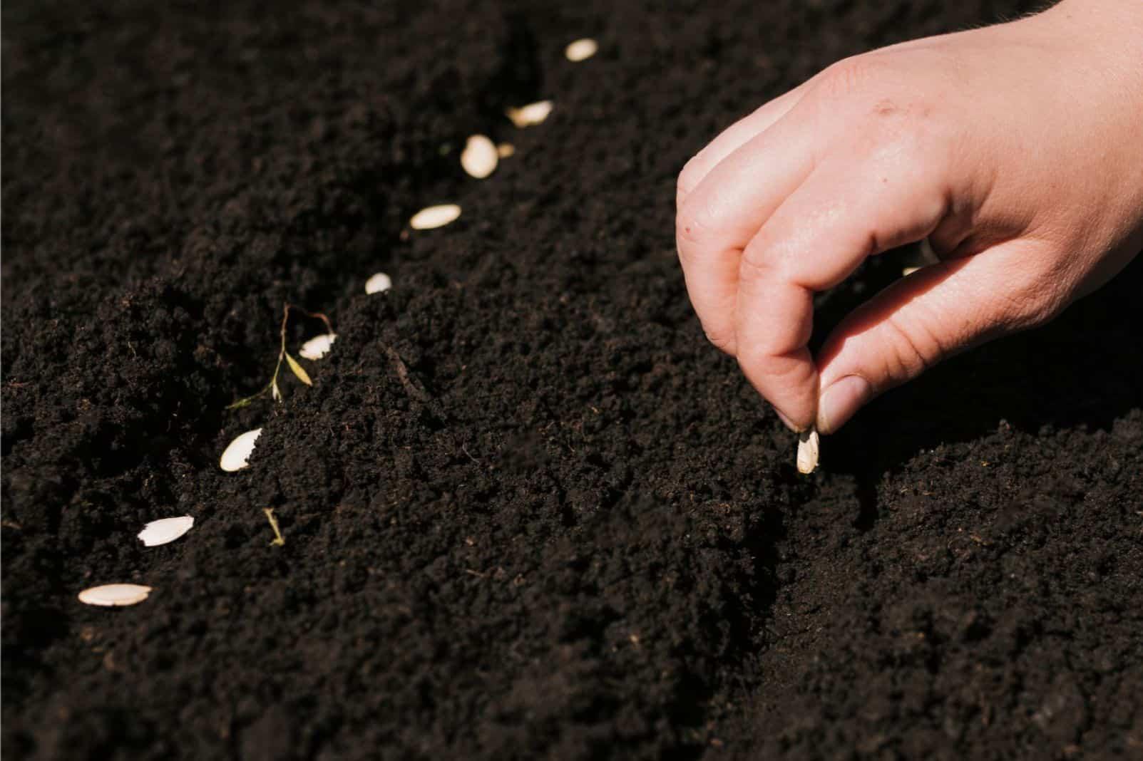 vegetable-gardening-tips-2-start-on-time