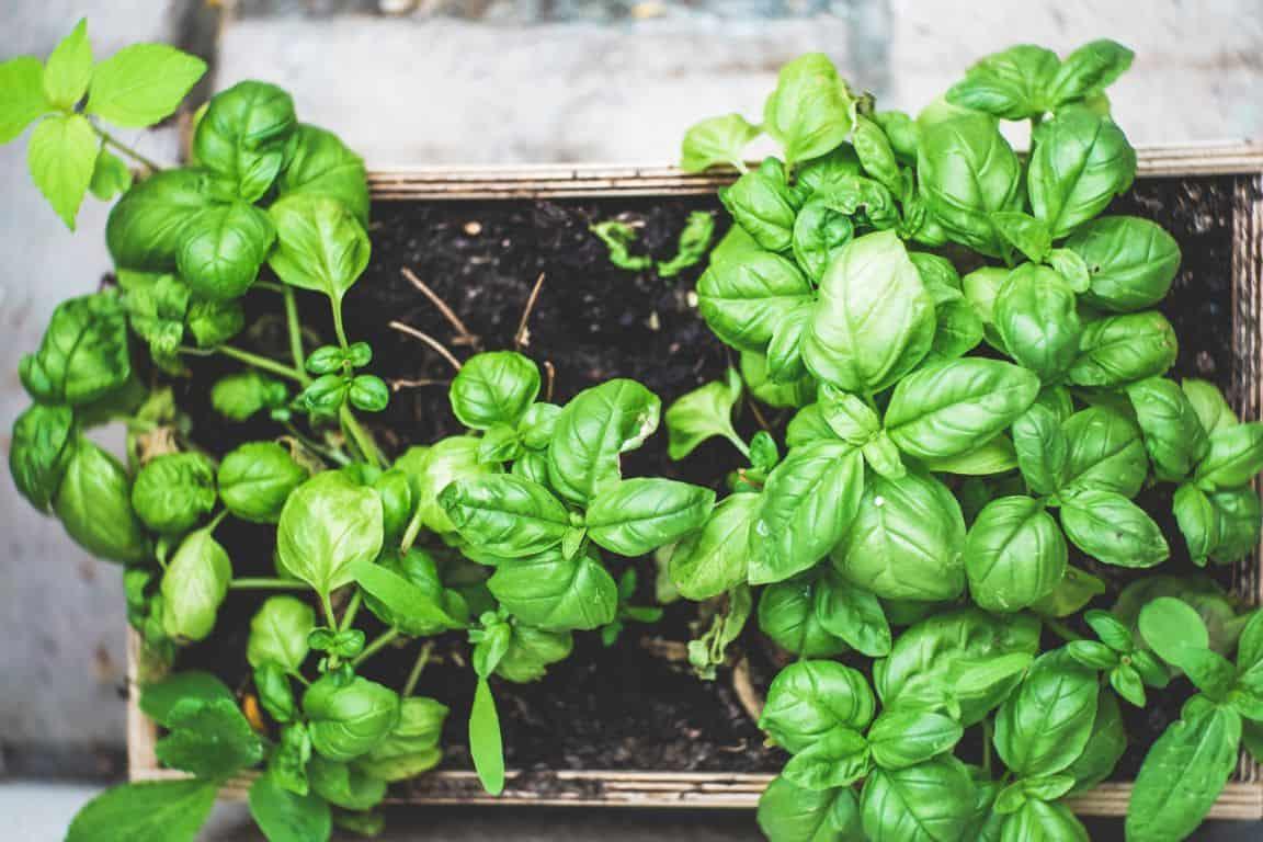 vegetable-gardening-tips-3-prepare-well-before-the-growing-season-begins