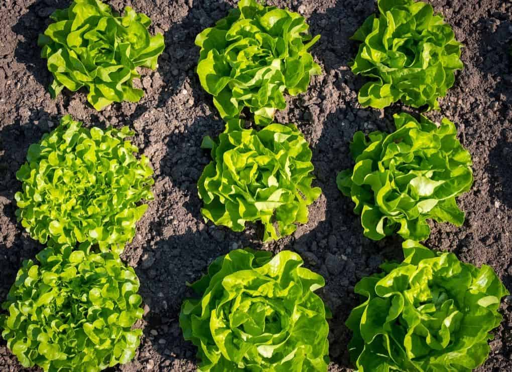 vegetable-gardening-tips-5-choose-the-right-location