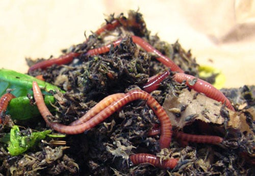 vermicompost A Guide to Vermicomposting