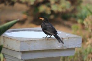ways-to-protect-your-garden-against-snow-and-ice-damage-10-birdbath