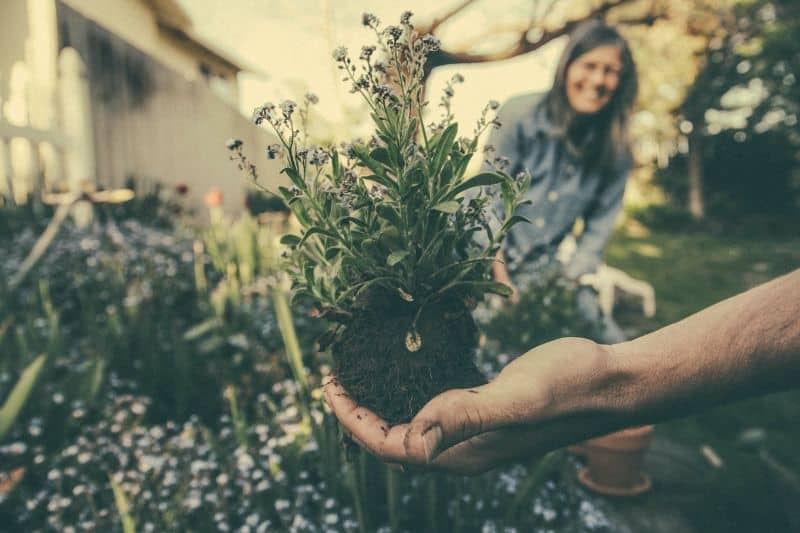 why-gardening-is-good-for-you-1-ecotheraphy