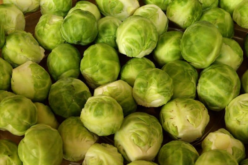 Growing brussels sprouts in your winter greenhouse