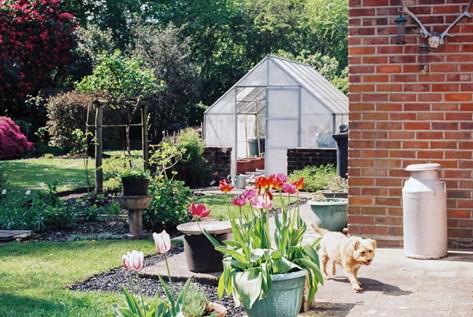 standard-greenhouse
